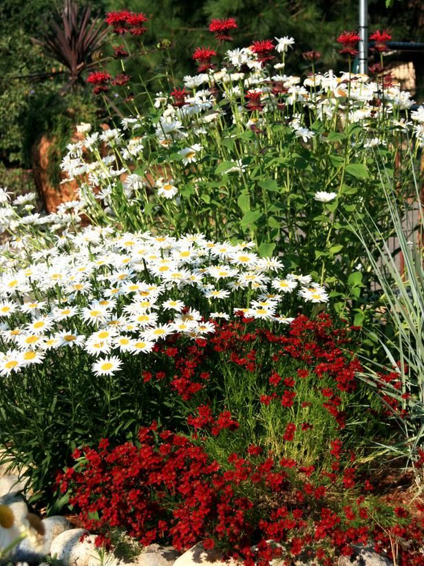 Red and White Flower Bed >> http://www.diynetwork.com/outdoors/cottage-style-landscapes-and-gardens/pictures/index.html?soc=pinterest