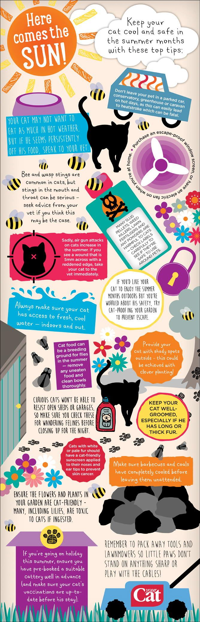 Summer cat care tips Cat care tips, Cat advice, Cat care