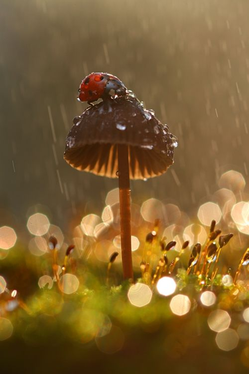 A Lady Bug in the rain on a chocolate mushroom ~ how adorable is that?