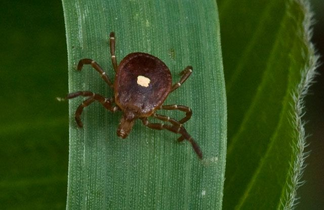 Vets warn cat owners about deadly tick disease - 14 News, WFIE, Evansville, Henderson, Owensboro