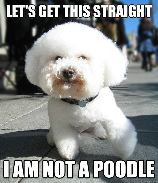 "People were ALWAYS like, ""Aw what a cute poodle!"" when I had my Bichon -_-"
