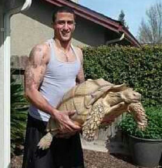 Colin Kaepernick with his turtle, Sammy... | Colin ...