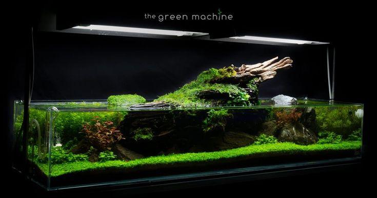 The Green Machine aquascaping shop aquarium plants \u0026 ...