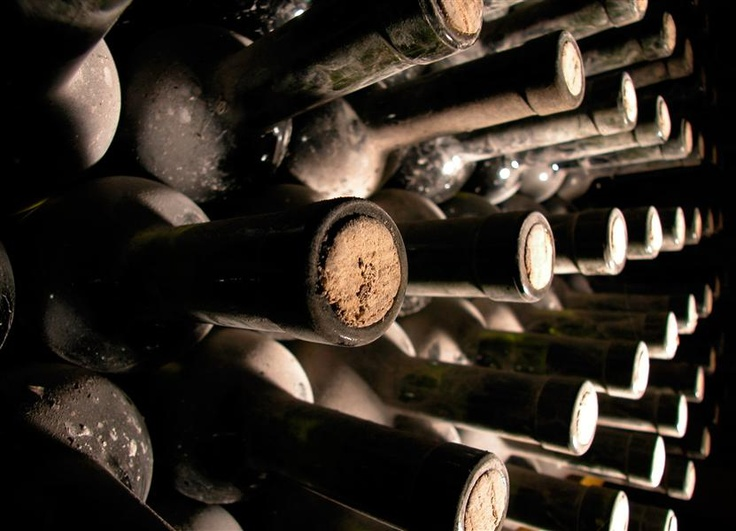 Gastronomy and enology - vine cellars