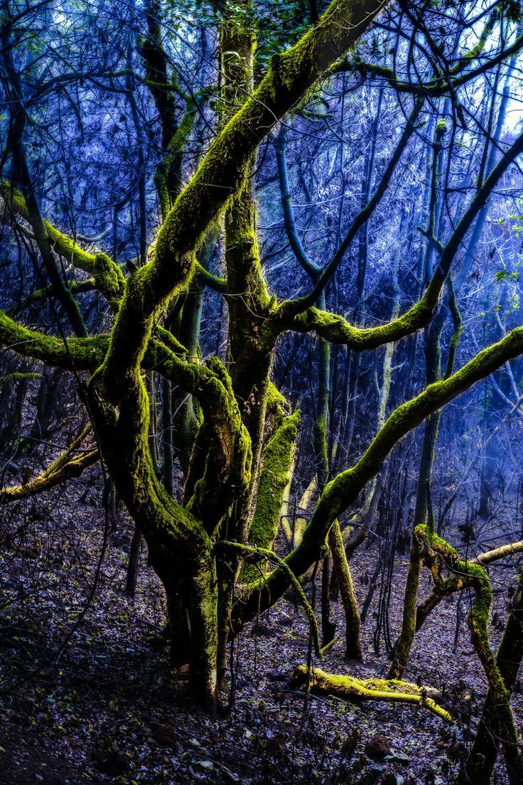 Scary cloud forest Ulrich Schoen - This shot was taken in the Garajonay National Park on the Canary Island La Gomera