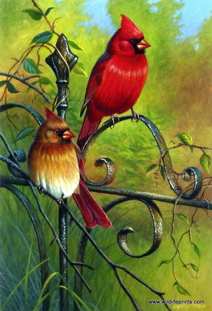 A favorite among songbirds, a pair of brilliant red cardinals perch on an ornate metal gate in this Cynthie Fisher bird print GARDEN VISITORS. Pairs well with Cynthie Fisher's other song bird prints s