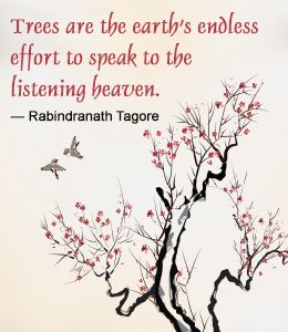 Great Quotes of Rabindranath Tagore https://play.google.com/store/apps/details?id=com.gnrd.quotefuzz