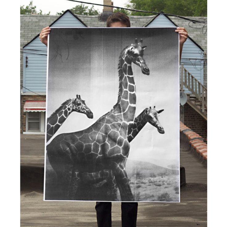 Giraffes Poster | DEBBIE CARLOS SHOP