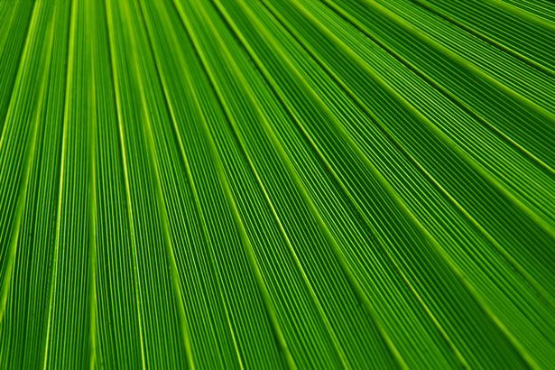 palm leaf texture: Google Image, Image Results, Palms Leaf, View, Domain Pictures, Leaves, Abstract Backgrounds, Leaf Texture