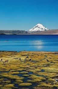 Chile (lake Chungara in Lauca National Park) and Bolivia (volcano Sajama, 6.542 m). And some vicunas grazing in the foreground.