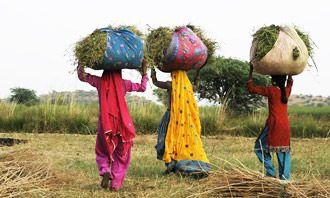 Klassisk landbrug finder vi rigeligt af i Indien