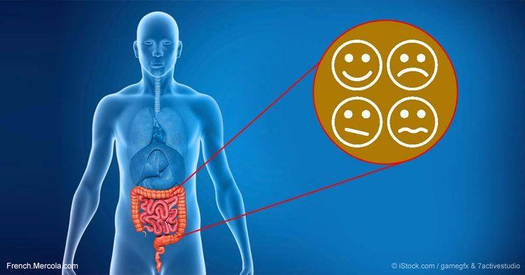 Une étude montre que les bactéries intestinales peuvent aider à prévenir les problèmes de comportement, une autre raison qui justifie d'envisager de prendre des probiotiques.