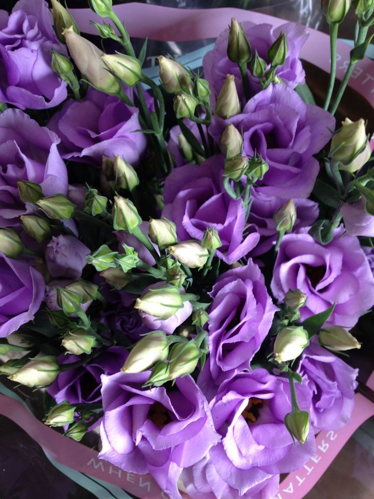 Lisianthus 'Croma Lavender'...Sold in bunches of 10 stems from the Flowermonger the wholesale floral home delivery service.