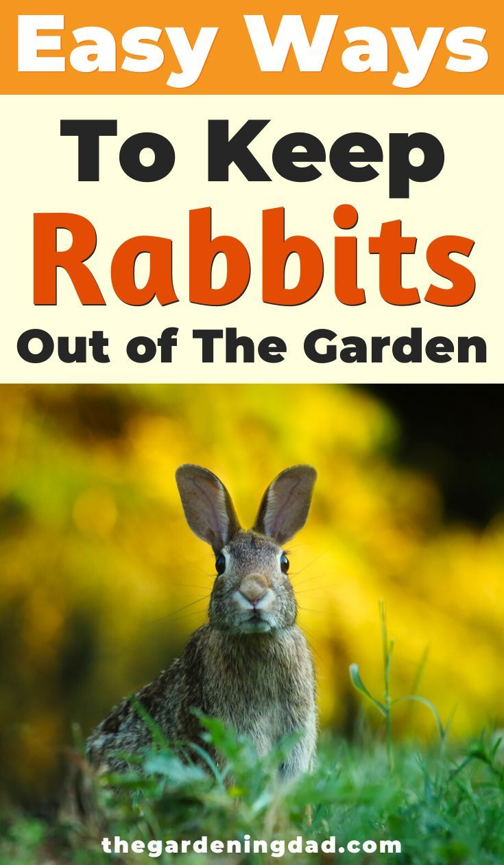 How to Keep Rabbits Out of Garden (20 EASY Tips | Garden ...