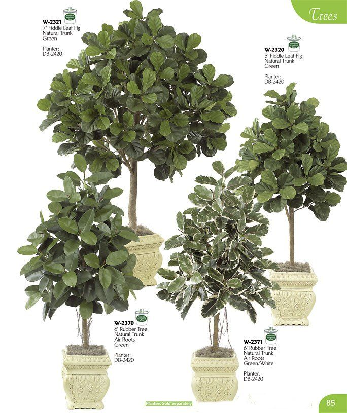 Fiddle Leaf Fig Tree Container Gardening Pinterest