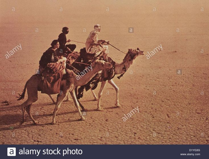 Download this stock image: Lawrence Von Arabien Lawrence Of Arabia T.E. Lawrence (Peter O'Toole, m) *** Local Caption *** 1962 -- - D1YG3G from Alamy's library of millions of high resolution stock photos, illustrations and vectors.
