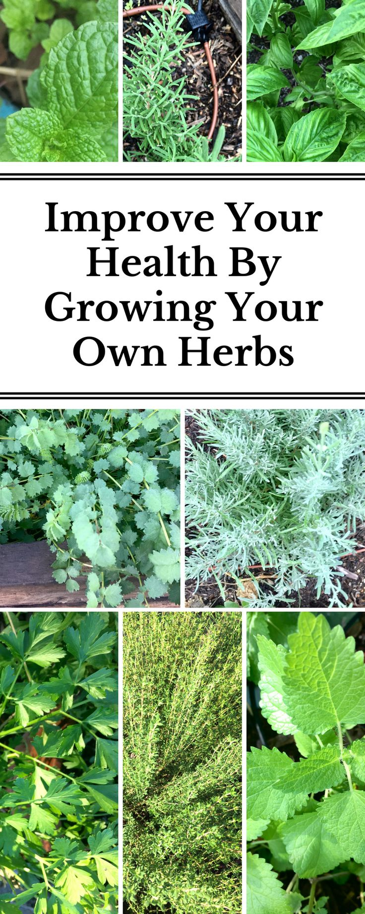 Herbs are among the best plants to start growing in your garden because you can use them in almost every dish without being wasteful (since fresh bundles are so big at the store) and they work as preventative medicine for you while improving your health! It's a win-win!