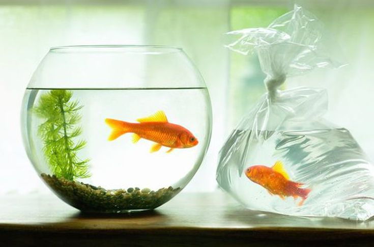 The 3 Feng Shui Fish Symbols To Attract Wealth