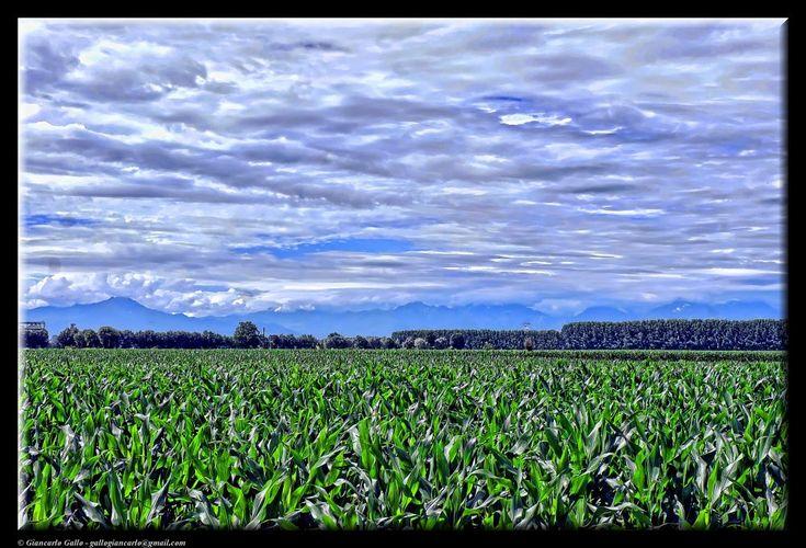 The cornfield by Giancarlo Gallo