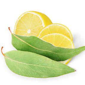 lemon eucalyptus oil natural mosquito repellent