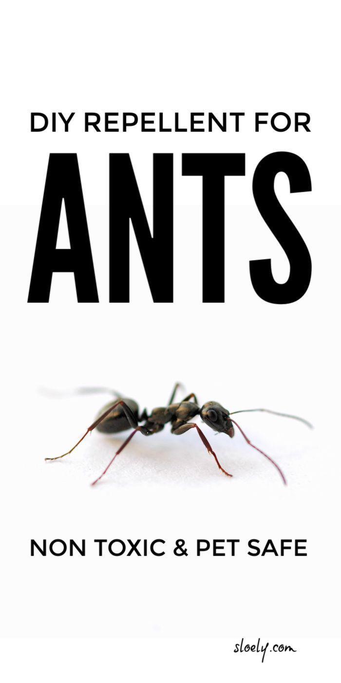 3ca50854958a806c0b8d3fd703620207 - How To Get Rid Of Ants Safely Around Pets