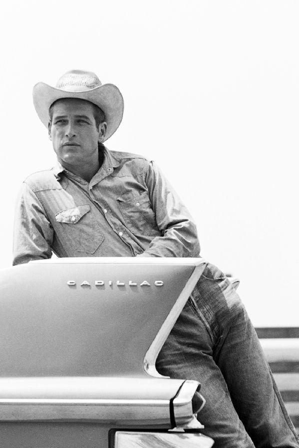 honey-rider: Paul Newman, Hud, 1962 - Dream Fierce