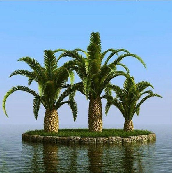 Palmaceae Artificial Natural Elaeis Fake Tree Canary Palm Phonix Palm artificial plants and trees $500~$1200