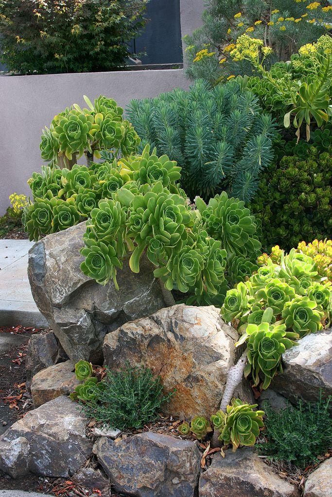 1221 best succulents images on pinterest for Succulent rock garden ideas