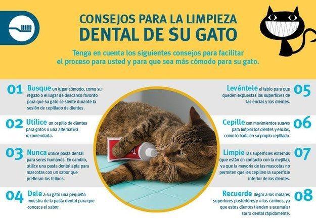 Nunca utilices tu pasta de dientes para lavar los dientes de tu gato. | 12 Infográficos prácticos que todo amante de los gatos necesita