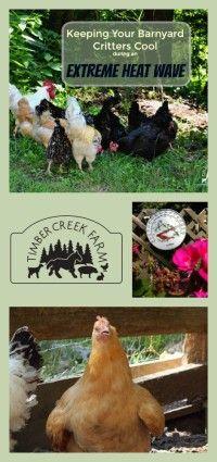 Keeping The Barnyard Residents Comfortable. Backyard ChickensBackyard ...