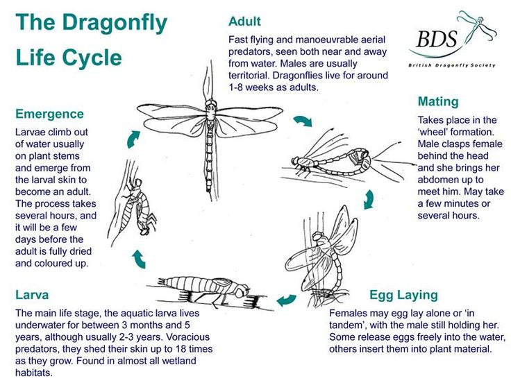57 best Writing - Dragonfly images on Pinterest | Dragon ...
