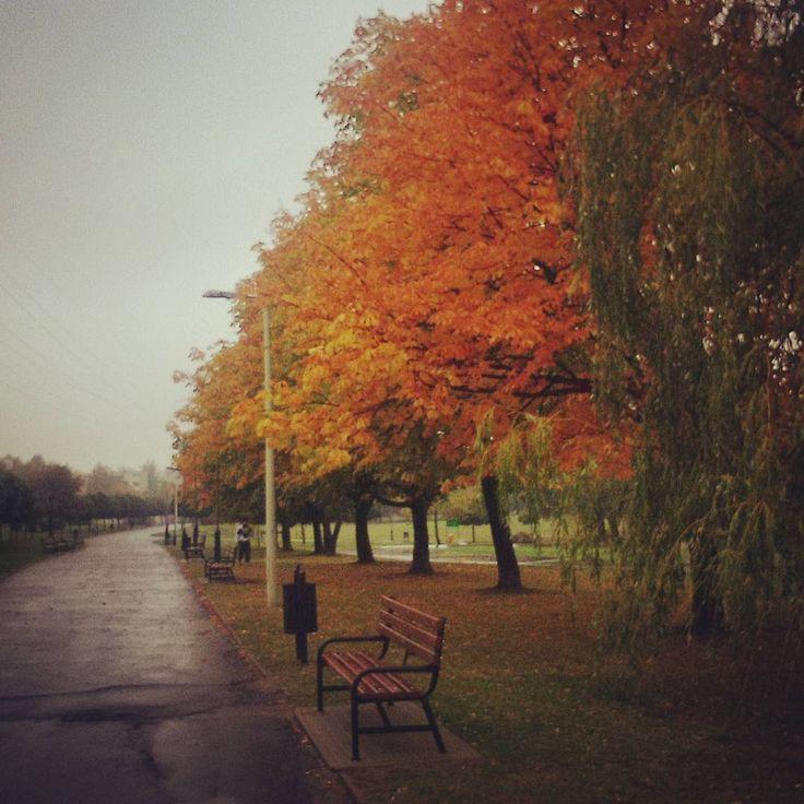 #park #city #citylife #running #jogging #fit #goodmorning #autumn #autumnleaves #leaves #jesień #rain #trees #fall #winteriscoming #lodz
