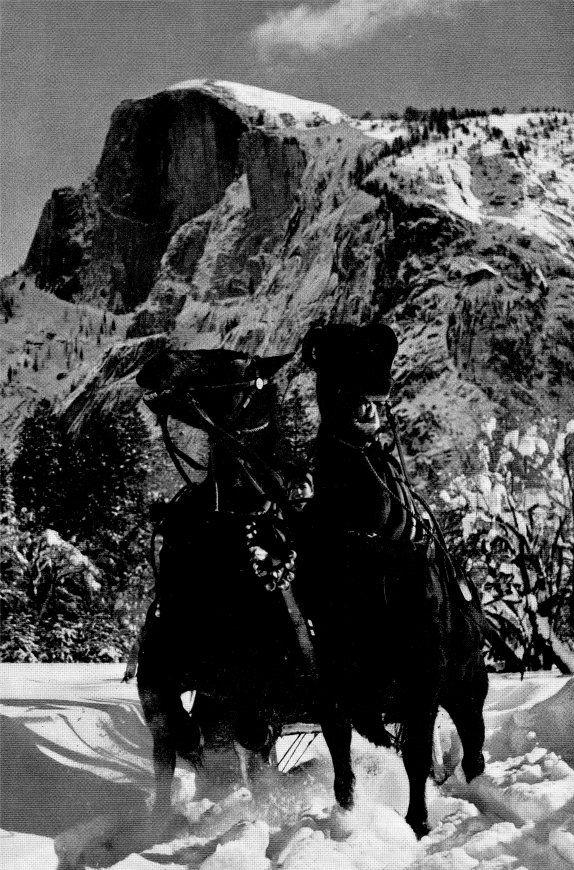 Horses in Snow by Ansel Adams. Yosemite.