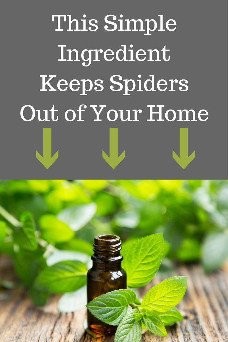 25 unique spider repellant ideas on pinterest killing for How to get spiders out of your house