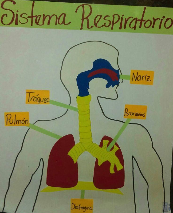 Aparato respiratorio humano manualidades foami
