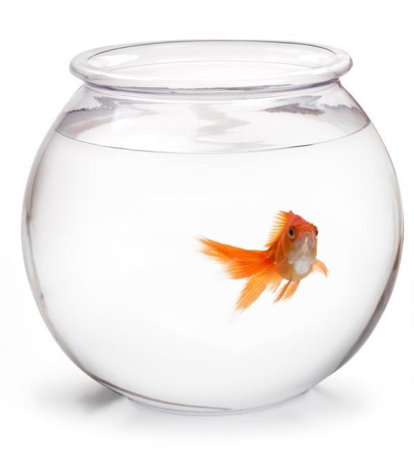 Peces para acuarios pequeños - ExpertoAnimal