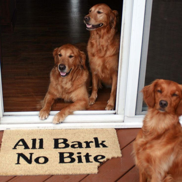 Dog Biting Rugs: 11 Best Images About Doormats For Animal Lovers On