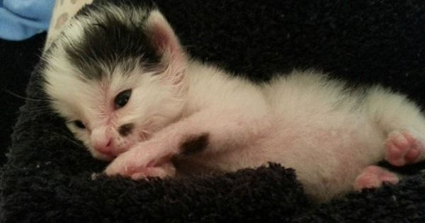 Canine Hypothyroidism What You Need To Know Kittens Puppy Find Cats And Kittens