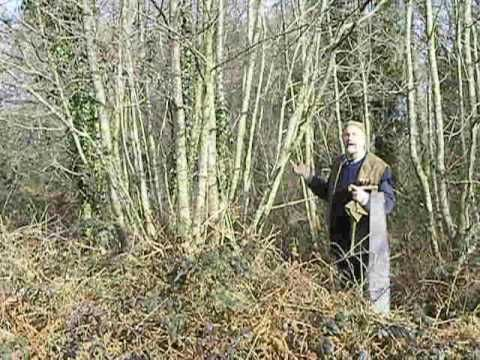 Coppicing - A Lost Art Revisited - Verge Permaculture