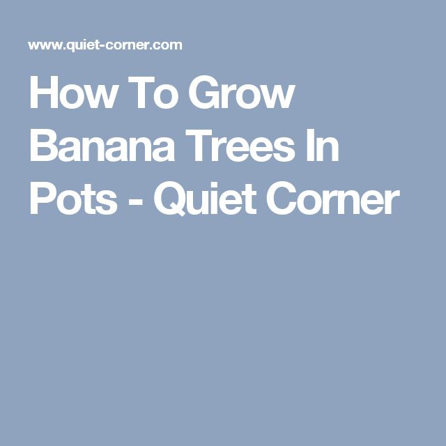 How To Grow Banana Trees In Pots - Quiet Corner