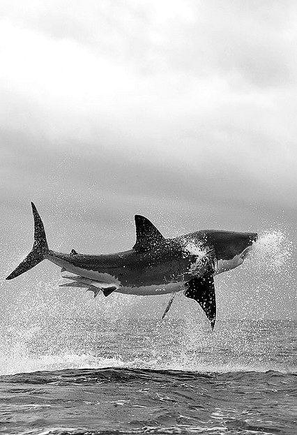 dance ocean shark - photo #32