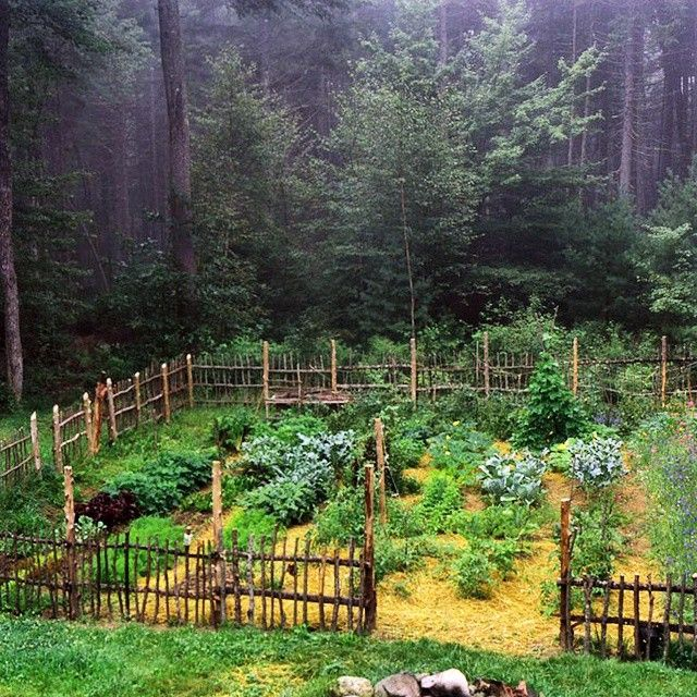 """""""Great little garden in the forest! This garden is growing some delicious food. Photo credit: absolutblu  Follow us on Facebook too ->…"""""""