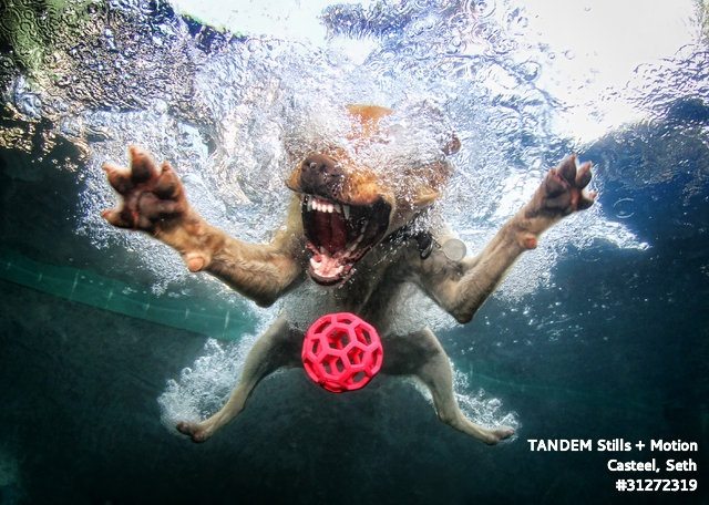 haha! this photographer is amazing!Underwater Photos, Ball, Dogs Photography, Underwater Photography, Dogs Photos, Underwater Dogs, Seth Casteel, Diving, Animal
