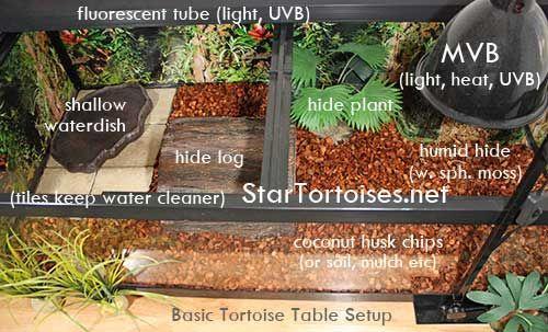 tortoise+enclosures+for+winter   Indoor housing for Star tortoises