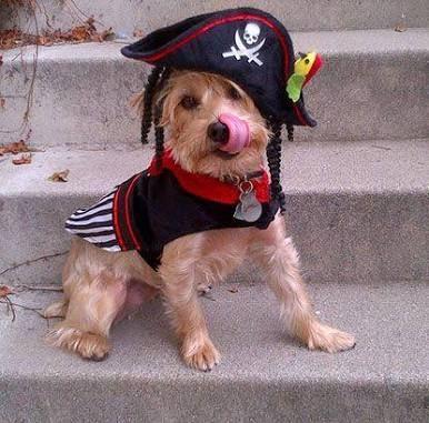 Resultado de imagen para disfraz fashion para perros