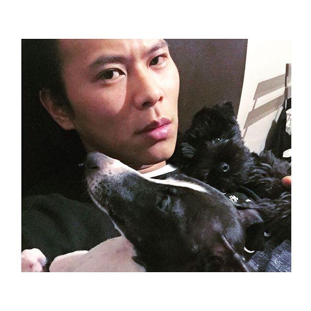 🌙Good Night🌙 #instadog#dogstagram#italiangrayhound#miniatureschnauzer#dog#doglife#dogmodel#dogstyle#cute#cutie#cooldog#lovedogs#lovemydog#犬バカ部#癒しわんこ#愛犬#イタグレ#ミニシュナ#多頭飼い #イタリアングレーハウンド  #ミニチュアシュナウザー  #本日のまるぼさんとちゃこーるさん #3日ぶりのお二方 #もはや眠すぎて俺の顔やばいことになっとる #もう寝ますおやすみなさい  #親バカ #loveu