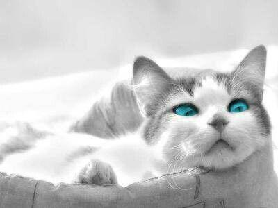 Kočka v pelišku kouka