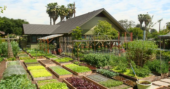 Niesamowite. To małe rodzinne gospodarstwo produkuje ponad 2,7 tony żywności rocznie na niecałych 400 m2