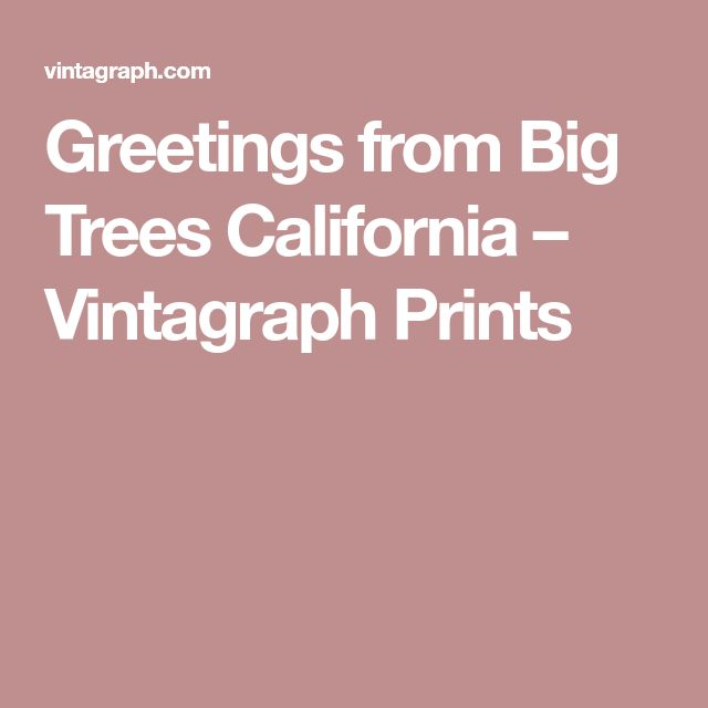Greetings from Big Trees California – Vintagraph Prints