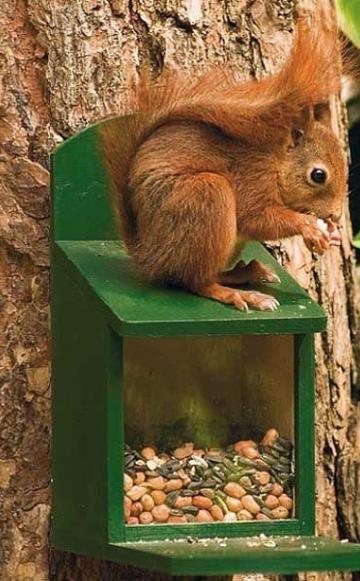 Eichhörnchen im Winter füttern